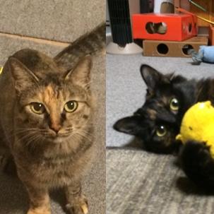 愛猫 ナナ&ノア